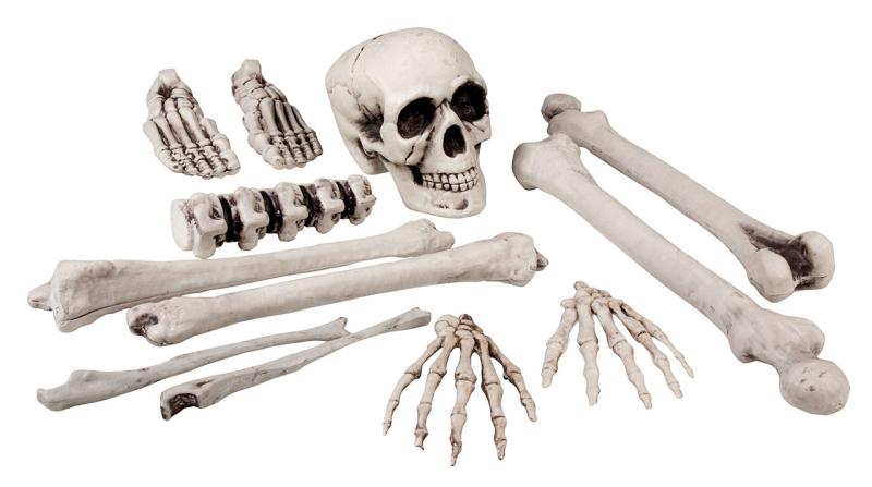 Sæt med 12 skeletdele