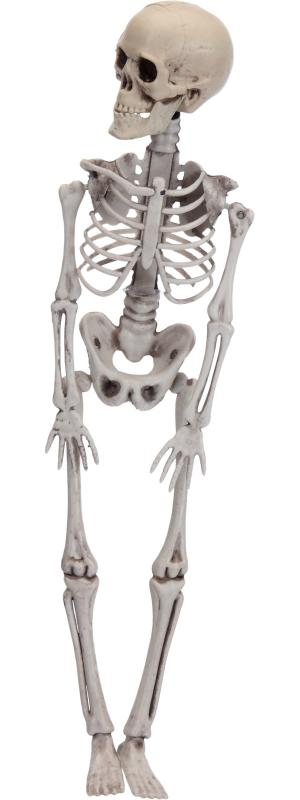 Skelet 42 cm